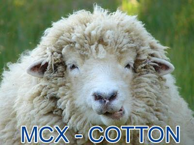 mcx cotton intraday tips