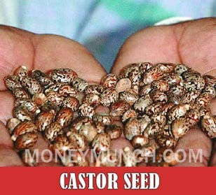 ncdex castor seed tips image