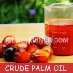 crude palm oil CPO intraday tips