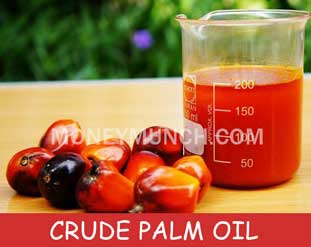 CPO Crude palm oil tips