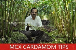 mcx cardamom intraday tips