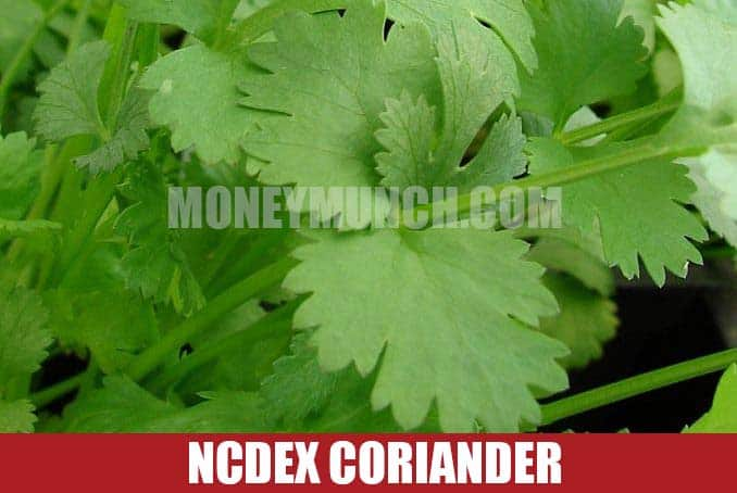 ncdex coriander intraday tips