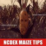 free ncdex maize tips